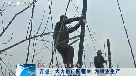 """吉县:大力推广防雹网 为果业生产""""保驾护航"""""""