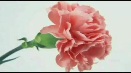 一曲最美的歌唱给母亲d64ccc1c38e41389cff66329267dd1d