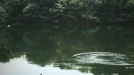 南北二炮手大战水库鲢鱼