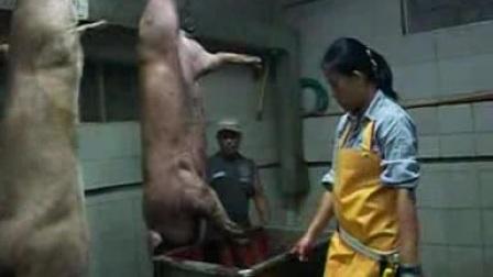 .女屠夫屠宰场杀猪全过裎.