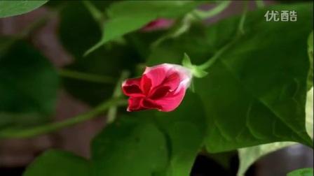 十字架生命的花