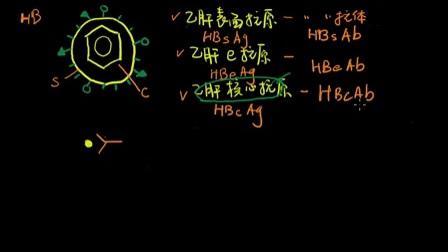 教你彻底读懂乙肝两对半.mp4