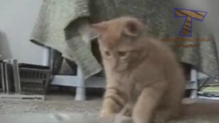 超级搞笑猫视频