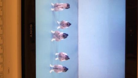 温岭市妞姿艺术培训,浙江省舞蹈考级一级:金色太阳