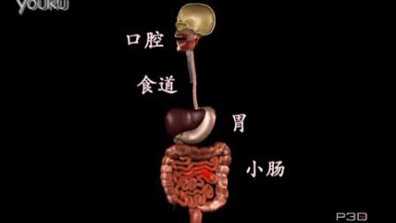 早吻能知道 食物在人体内的旅行【动画】