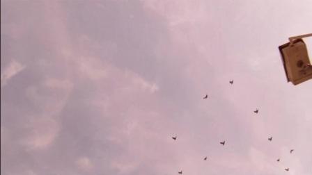 幼鸽生活片