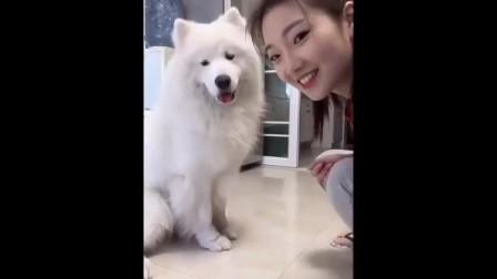 狗真可爱 好想抱抱它主人