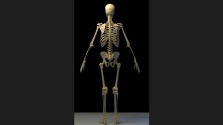 第二部分人体结构的核心学习方法下