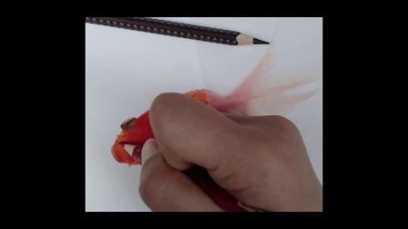 金鱼 适合新手临摹的彩铅画 彩铅画图片