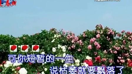 如果你是落花-任妙音(MV)