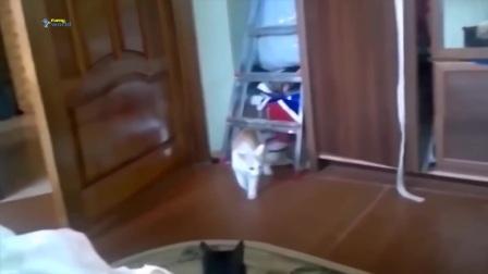 有趣的动物跳跃失败_-_最好的搞笑动物