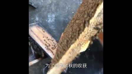 湛江市麻章区太平镇吕宅村养蜂人