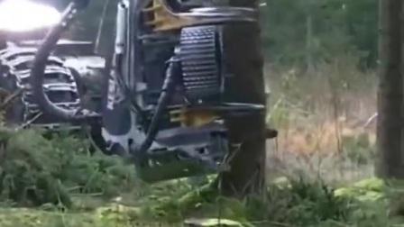 这锯树的机器太好了