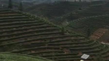our green tea mountain