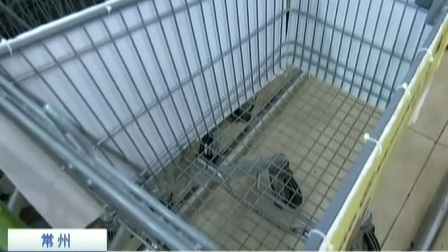 超市推出宠物专用车 不是鼓励是无奈 170512 新闻空间站