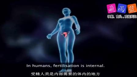 2分钟看懂受孕原理全过程,胎儿性别此时已定,女翻男是不可能的