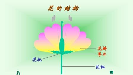 开花和结果  花的结构