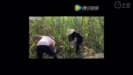广西老表被美女骗回家干农活,笑抽了