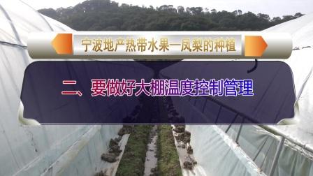 宁波地产热带水果—凤梨的种植
