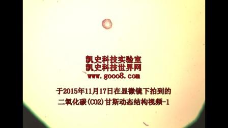 201511171深圳实验室CO2甘斯显微视频-1