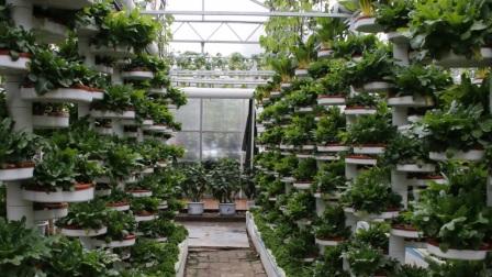寿光蔬菜基地