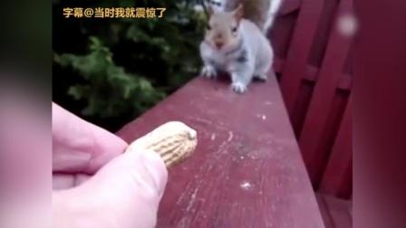 这只松鼠可能是个戏精
