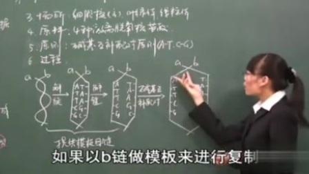 人教高中生物必修2-DNA的复制_8960[记忆力博客网盘]