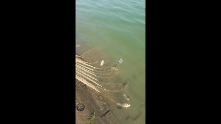 钓鱼: 隔着墙偷偷撒一网,这渔获爽爆了!