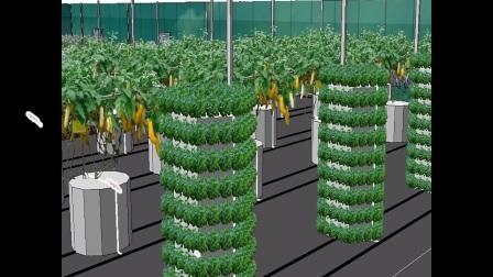 6048平方米阳光板温室型蔬果实用化雾培基地