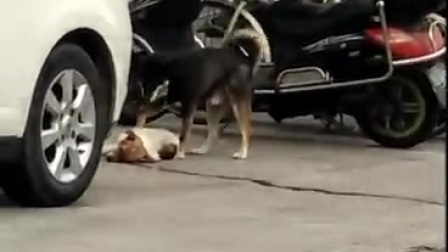 希望大家看到受伤的小动物,请把它送到宠物医院