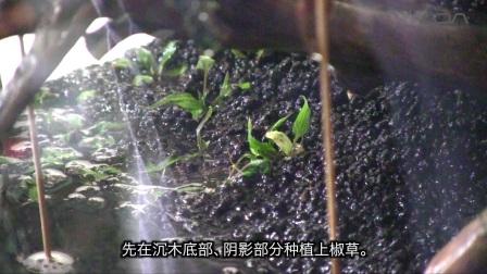 [ADAview] 120cm水草造景 沉木与附着性水草的凹型构图