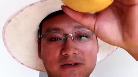 王哥田东芒果台农1507819 9667
