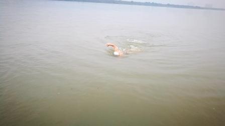 自由泳学习