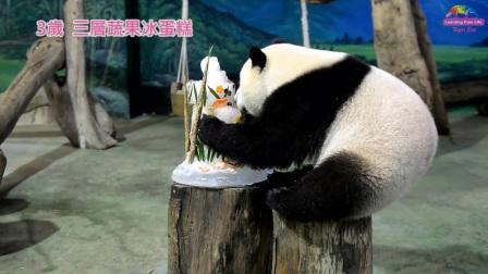 動物園暑假首發活動:「圓仔」生日派對將登場!
