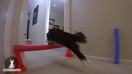 轻松一刻:猫咪障碍赛