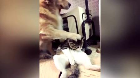 猫咪尿床, 金毛帮主人惩罚它