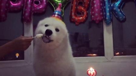 狗狗过个生日都这么气派, 我还是去搬砖给自己买个蛋糕