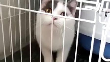 猫咪图片★淘宝店铺搜:双飞猫