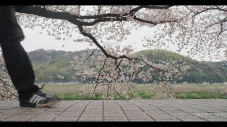 壮丽的日本樱花 [4K]