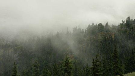 加拿大BC省惠斯勒观熊之旅