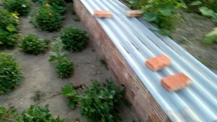 蝎子养殖场建设图片说明