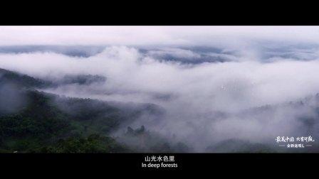 【最美中国大有可观】敖鲁古雅·使鹿部落预告片