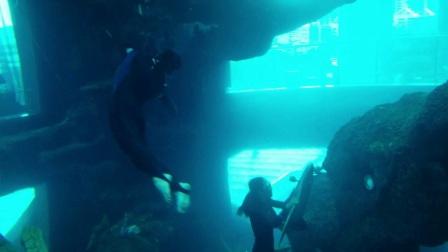 哈威水中飞翼H2,浮游、潜水、冲浪神器!-双人游泳+m