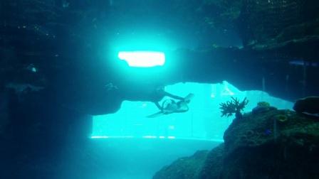 哈威水中飞翼H2,浮游、潜水、冲浪神器!-女子旋转+m