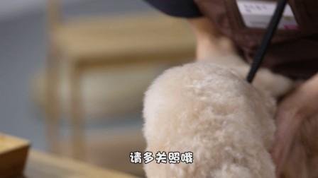 永旺宠物美容课第二季第九集