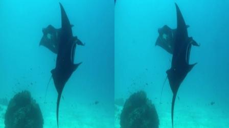 3D神奇的海洋(超出屏立体效果)