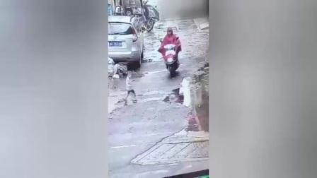 孕妇骑摩托撞到小孩两次碾压后逃逸: 已自首, 称