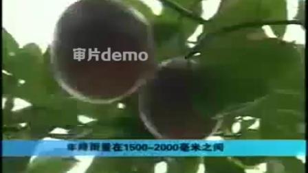 百香果种植技术教程