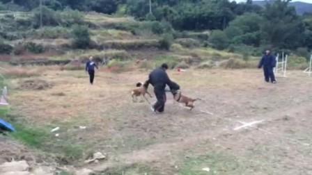 总经理做靶手 双犬攻击