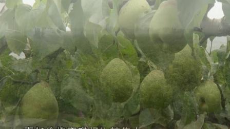 ①梨树高接 致富快捷(上)②梨树高接 致富快捷(下)③大棚茄子花果期管理